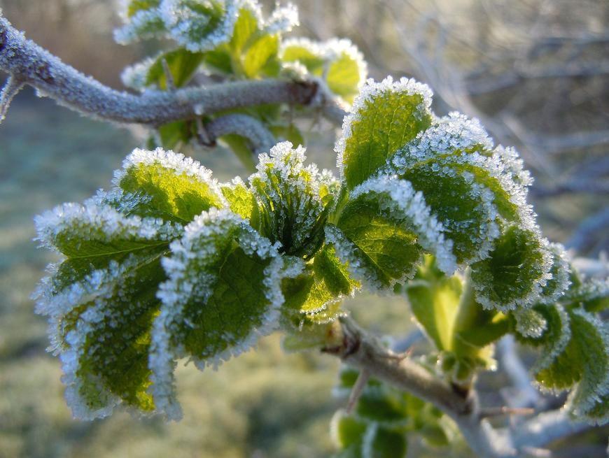 Zaštita bilja prije jesenskih mrazova