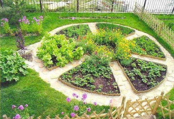 Mali savjeti kod uzgoja presada povrća do odrasle biljke