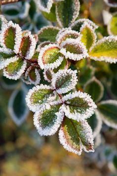Zimska zaštita bilja